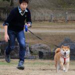 柴犬まるこは飛行犬にはなれないのか?