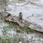 雨ふりすずめさん