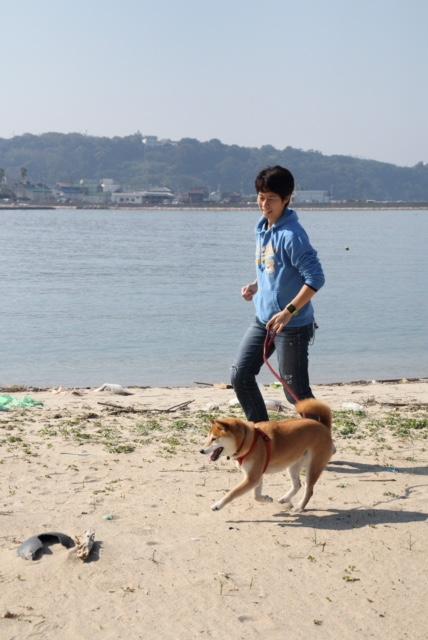 2017柴犬まるこの小旅行☆大好きな車にのって淡路島~愛媛へ行ってきました!