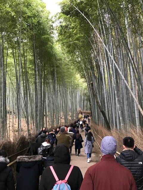 2018年1月28日(日)新春まるこ鈴虫寺~嵐山・嵯峨野を散策NWイベント