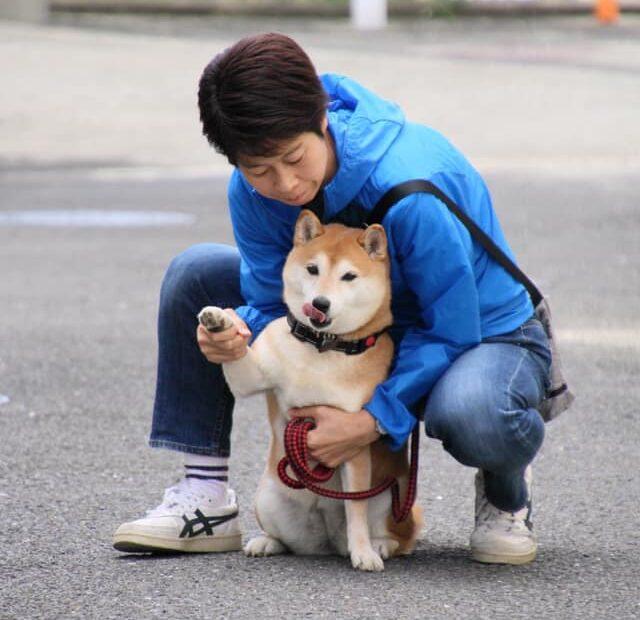 そうだ!京都へ行へ行こう☆ 柴犬まるこ10歳