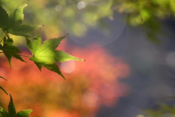 11月15日(日)秋の遠足☆まるこ武田尾廃線跡コース・生瀬~武田尾ノルディックハイキングイベント
